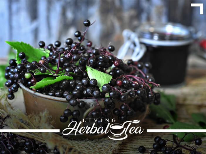 Healing Herbal Tea : Elder