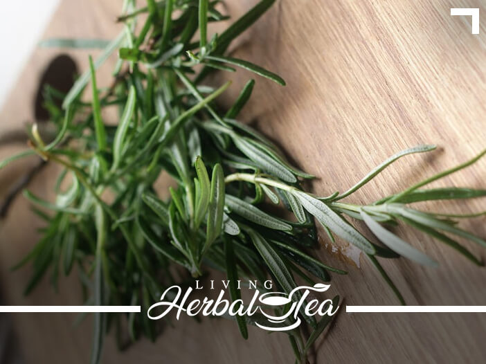 Healing Herbal Tea : Rosemary