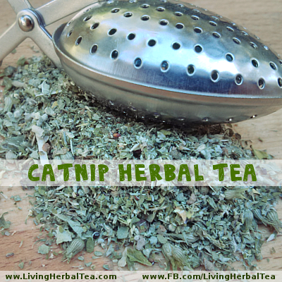 Catnip Herbal Tea 01 TEXT