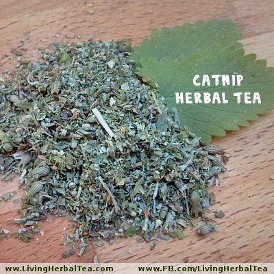 Catnip Herbal Tea 02 TEXT