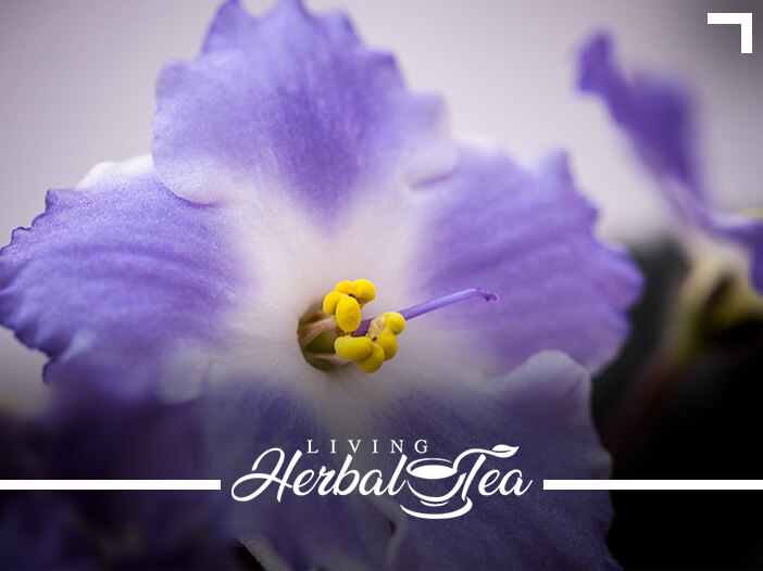Herbal Tea For A Lively Libido