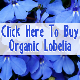 Organic Lobelia Inflata Herbal Tea