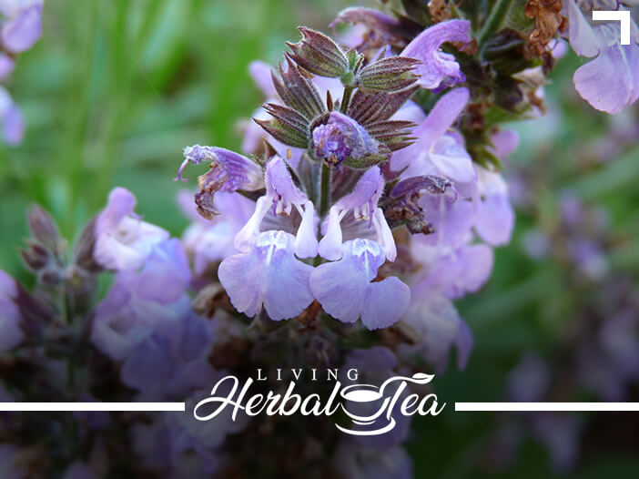 Herbal Teas That Calm The Mind And Relax The Body
